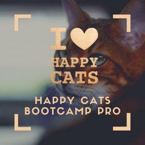 Happy Cats Bootcamp Pro
